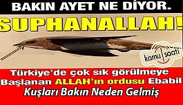 Türkiye'de Çok Sık Görülen Allah'ın Ordusu Olarak Bilinen Ebabil Kuşları Geldi