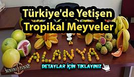 Türkiye'de yetişen adını hiç duymadığınız tropikal meyveler