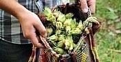 Fındık üreticilerine destek ödemeleri için açıklama - İşte destek ödeme tarihleri